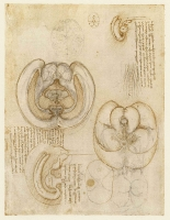 104r_Anatomical_Studies_19127r_104r