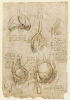 106v_Anatomical_Studies_19098v_106v
