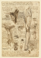134r_Anatomical_Studies_19002r_134r