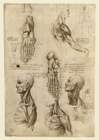 134v_Anatomical_Studies_19002v_134v