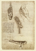 135r_Anatomical_Studies_19000r_135r