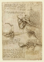 136r_Anatomical_Studies_19001r_136r