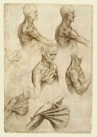 136v_Anatomical_Studies_19001v_136v