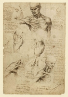 137r_Anatomical_Studies_19003r_137r