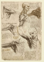 137v_Anatomical_Studies_19003r_137v