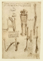 138r_Anatomical_Studies_19004r_138r