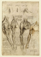140v_Anatomical_Studies_19008v_140v
