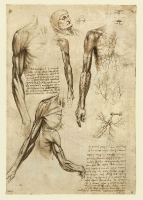 141r_Anatomical_Studies_19005r_141r