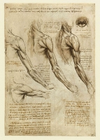 141v_Anatomical_Studies_19005v_141v