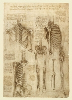 142r_Anatomical_Studies_19012r_142r
