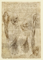142v_Anatomical_Studies_19012v_142v