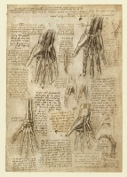 143r_Anatomical_Studies_19009r_143r