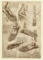 145r_Anatomical_Studies_19011r_145r