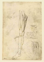 146r_Anatomical_Studies_19006r_146r