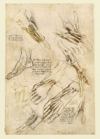 146v_Anatomical_Studies_19006v_146v