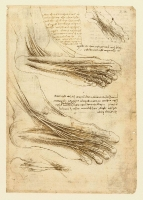 147r_Anatomical_Studies_19010r_147r