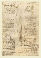 147v_Anatomical_Studies_19010v_147v
