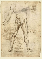 148r_Anatomical_Studies_19014r_148r
