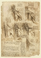 149r_Anatomical_Studies_19015r_149r