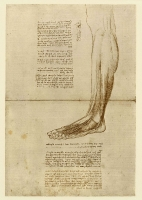 150r_Anatomical_Studies_19016r_150r