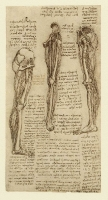 152r_Anatomical_Studies_12619r_152r