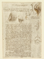 157r_Anatomical_Studies_19064r_157r