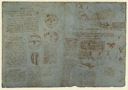 166r_Anatomical_Studies_19073r_19074r_166r