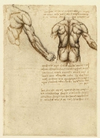 047r_Anatomical_Studies_19044r_047r
