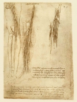 064r_Anatomical_Studies_19022r_064r
