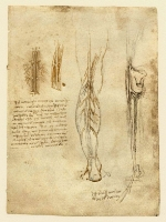 066r_Anatomical_Studies_19024r_066r