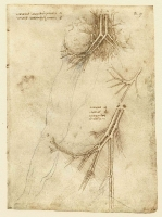 068r_Anatomical_Studies_19026r_068r