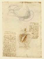 071r_Anatomical_Studies_19029r_071r