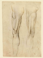078r_Anatomical_Studies_19036r_078r