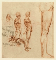 082r_Anatomical_Studies_12640r_082r