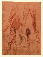 095r_Anatomical_Studies_12625r_095r