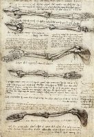 anatomical_study_of_the_arm