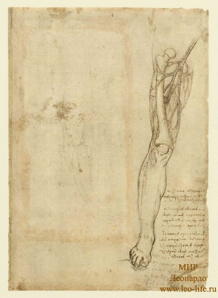 112r_Anatomical_Studies_12624v_112r